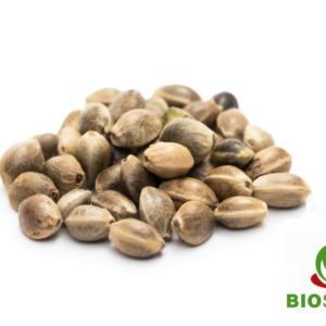 Seeds biosuisse einzeln