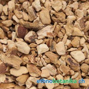 Acorus calamus rohstoff 01