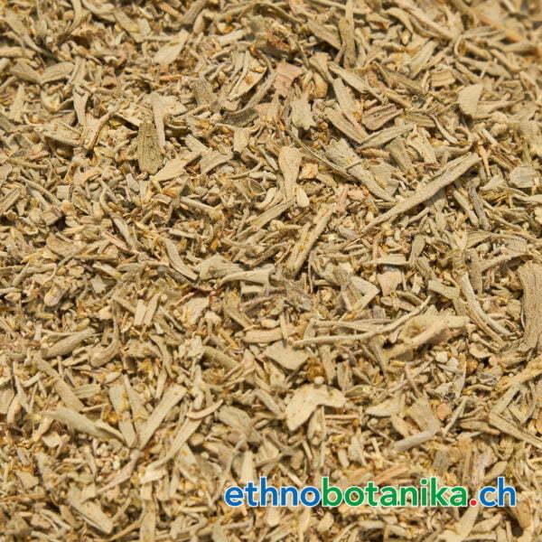 Artemisia vulgaris rohstoff 01