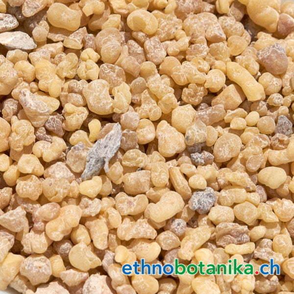 Boswellia carteri Mexiko rohstoff 01