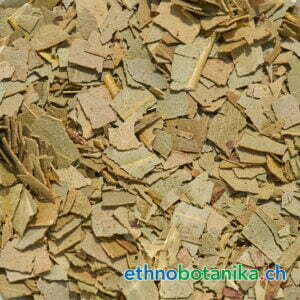 Eucalyptus obliqua rohstoff 01
