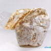 Ganoderma lucidum Erntballen 01