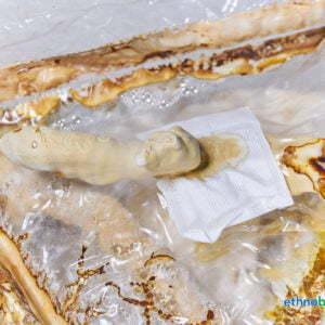 Ganoderma lucidum Erntballen 03