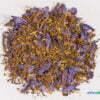 Nymphaea caerulea 01