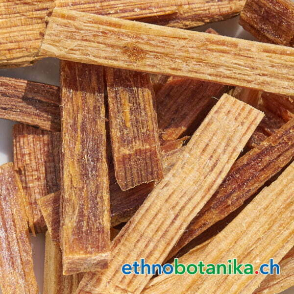 Pinus chiapensis rohstoff 01