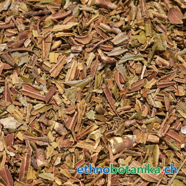Rhododendron ferrugineum rohstoff 01