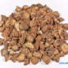 Salvia miltiorrhiza bunge 01