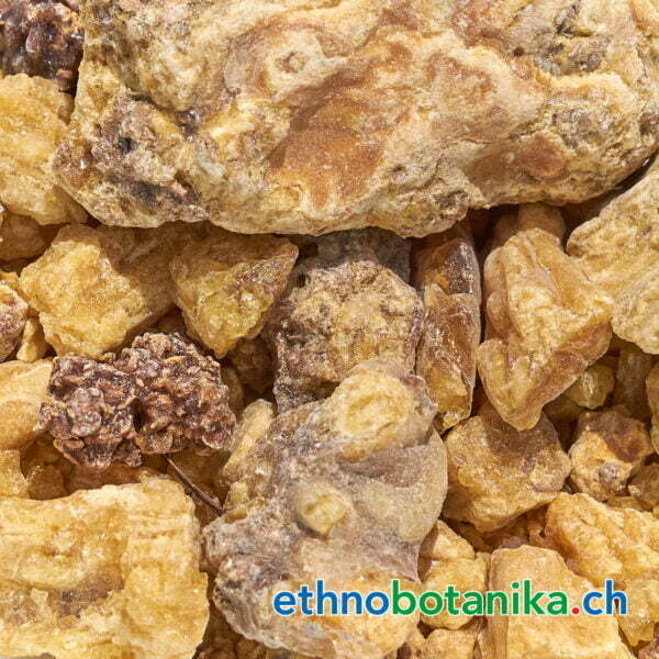 Shorea robusta rohstoff 01
