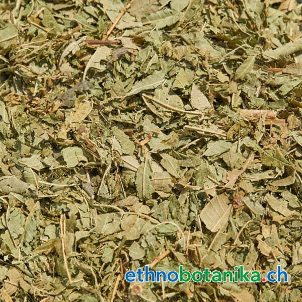 Verbena officinalis rohstoff 01